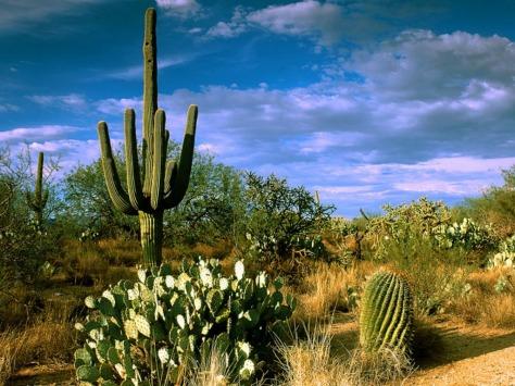 Desert_Cactus_Wallpaper__yvt2