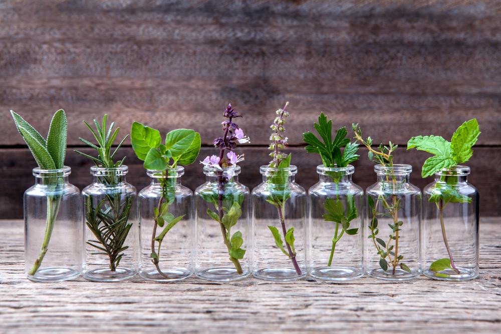 grow-herbs-in-water-1